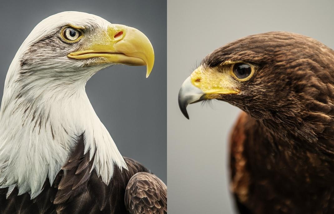 Гордые и величественные птицы фотографа Andrew Shaylora