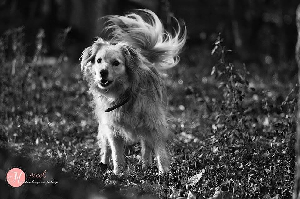 Фотограф из Словакии делает прекрасные фотопортреты собак