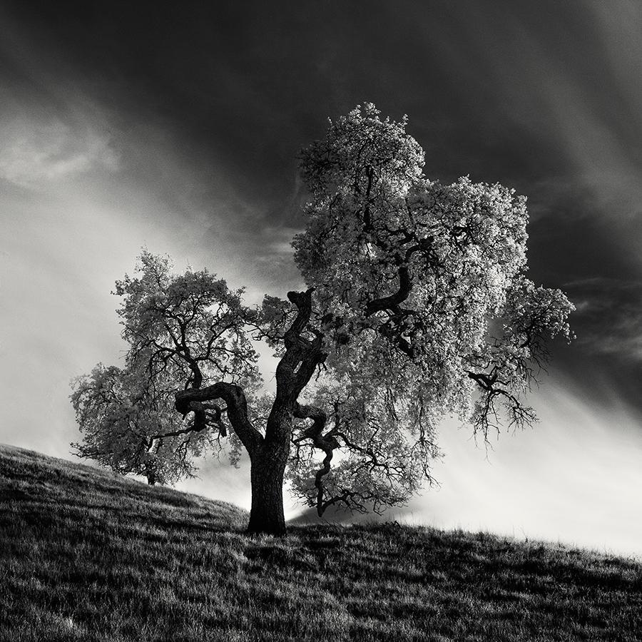 Инфракрасная тишина деревьев