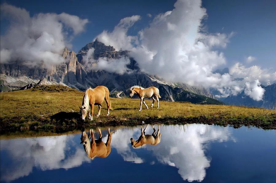 Потрясающие фотографии, созданные с применением композиционных принципов