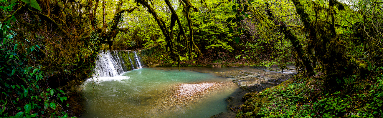 Abkhazia. Fairy forest_20