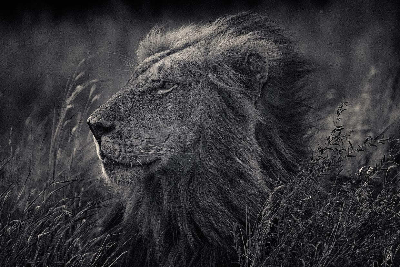Животный мир фотографа Antti Viitala