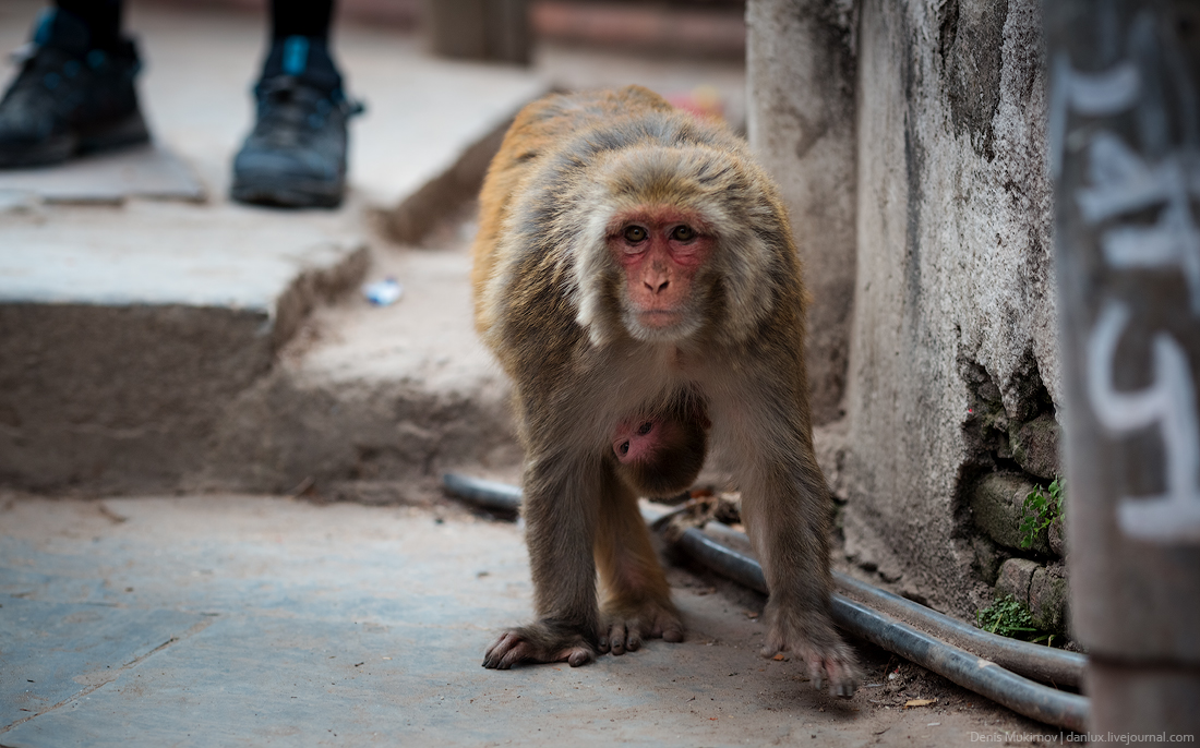 Kathmandu. The streets and shrines_27