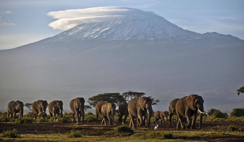 World Elephant Day_02