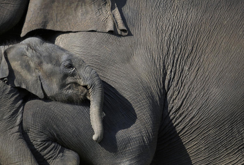 World Elephant Day_03