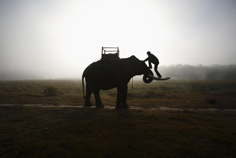 World Elephant Day_04