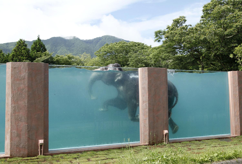 World Elephant Day_05