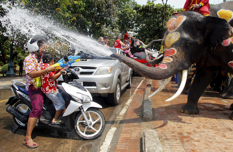 World Elephant Day_06