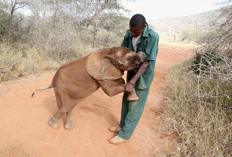 World Elephant Day_07