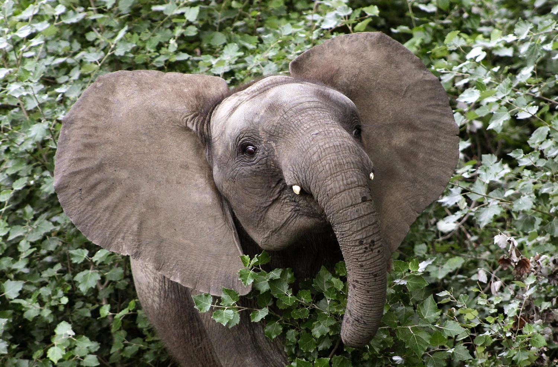 World Elephant Day_11