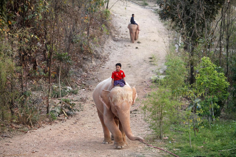 World Elephant Day_12