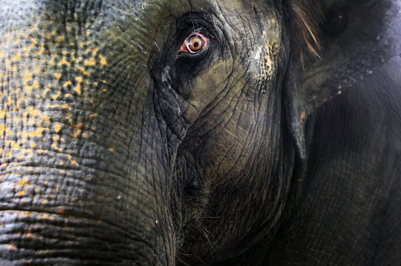 World Elephant Day_13