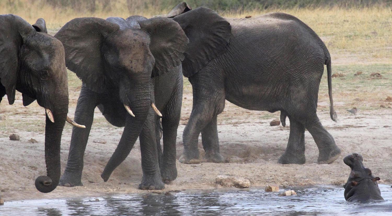 World Elephant Day_14