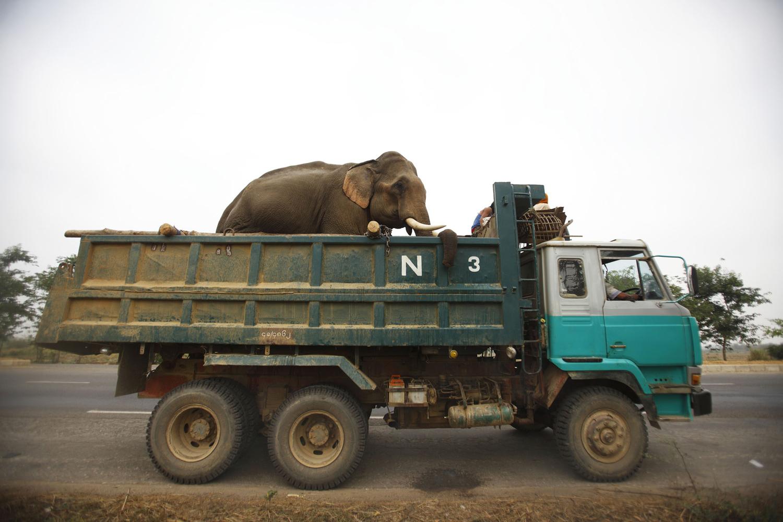 World Elephant Day_15