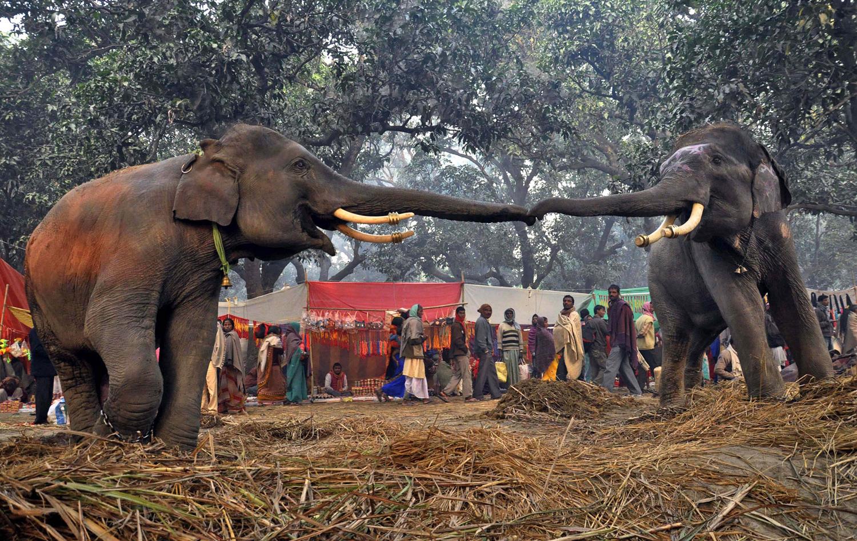 World Elephant Day_17