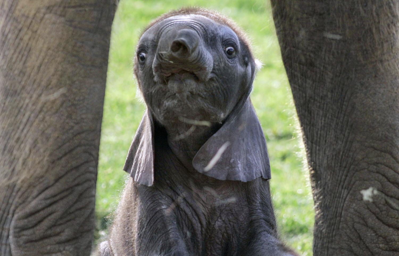 World Elephant Day_18
