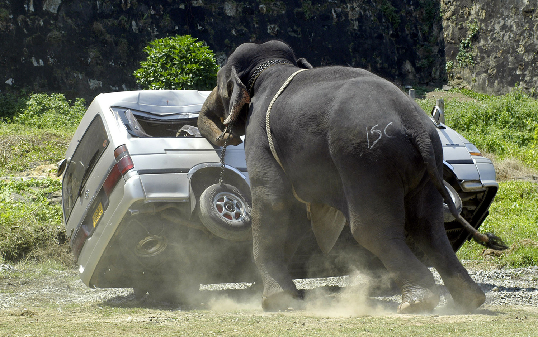World Elephant Day_19
