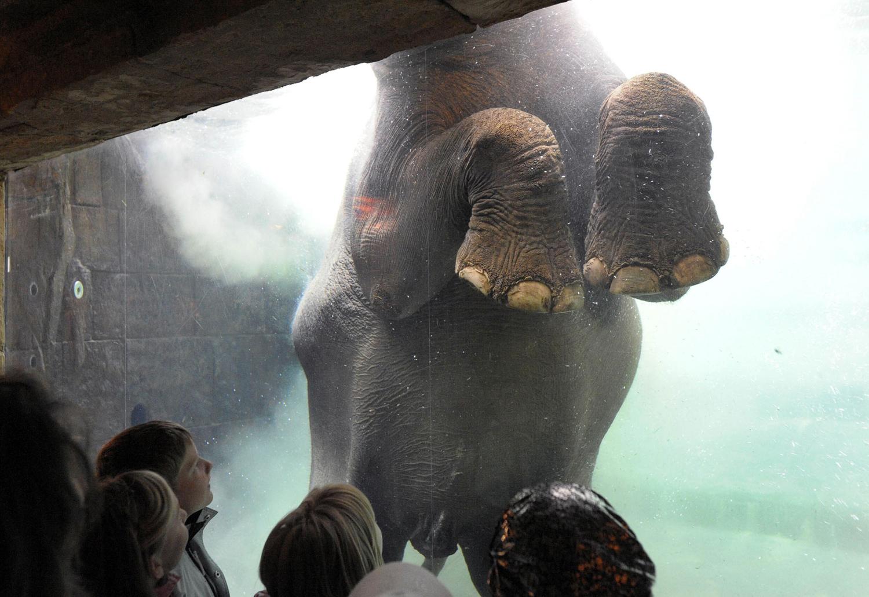 World Elephant Day_20