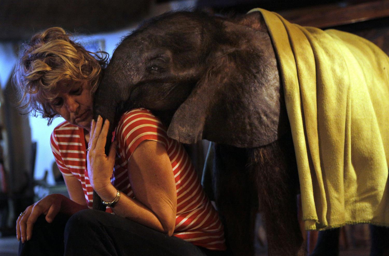 World Elephant Day_21