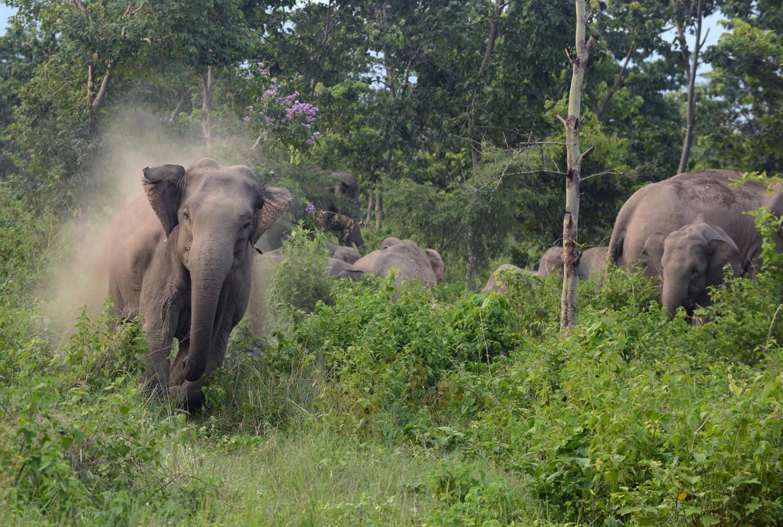 World Elephant Day_22