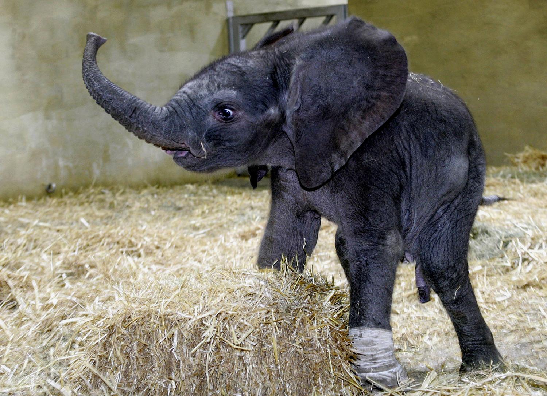 World Elephant Day_24