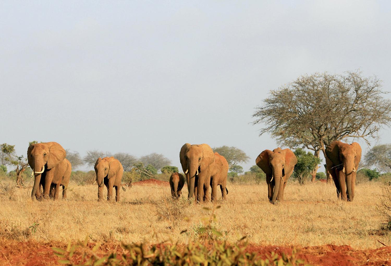 World Elephant Day_25