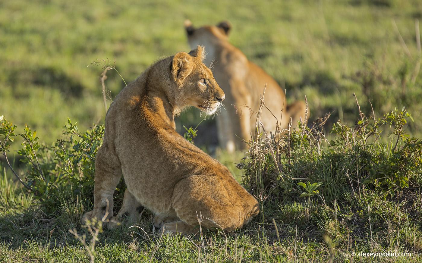 World lion day_04