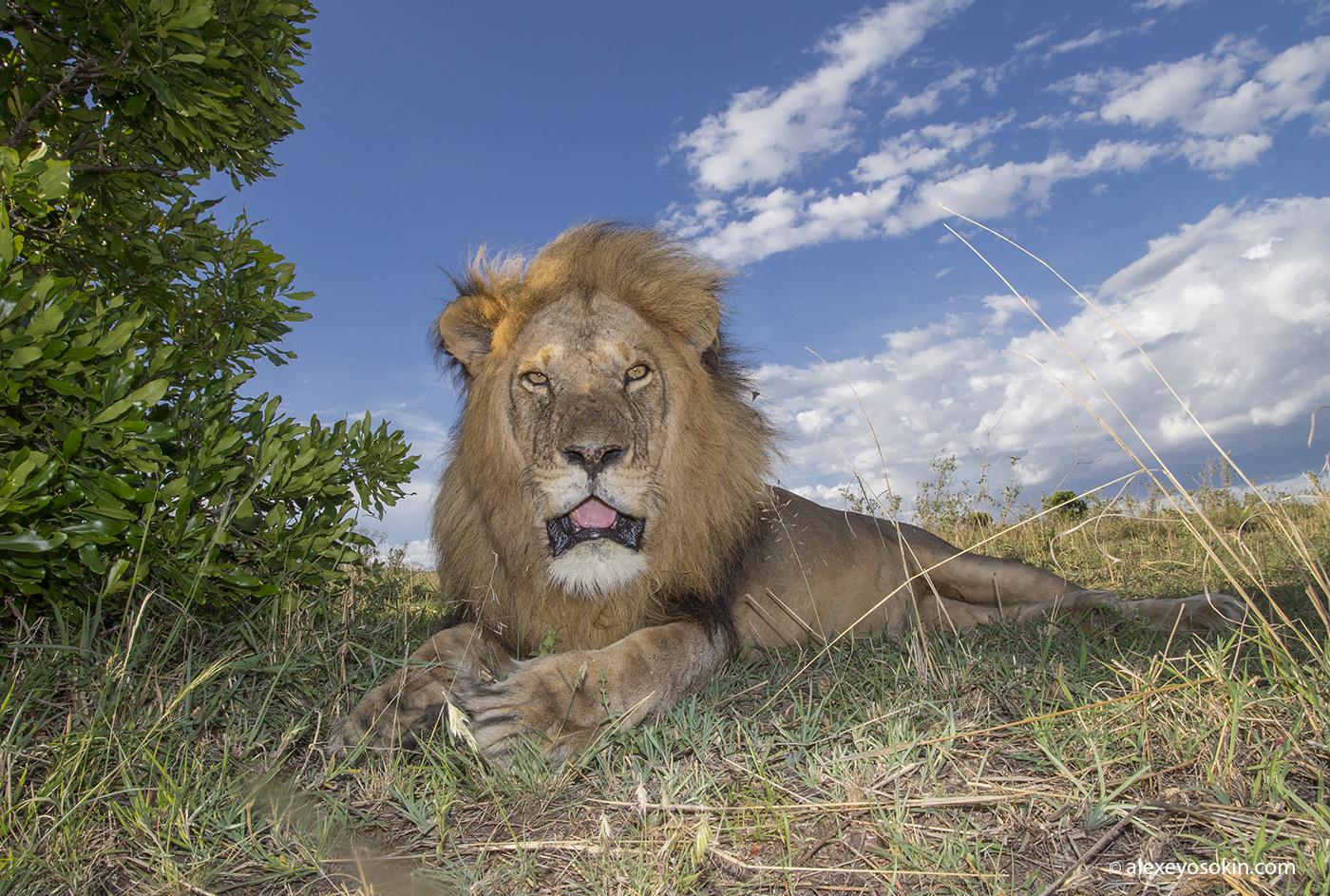 World lion day_18