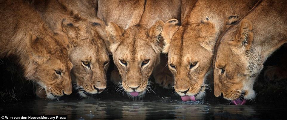 animal kingdom_14