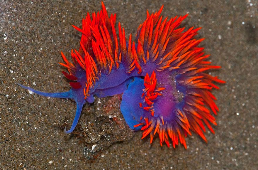 beautiful-unusual-sea-slugs-10__880