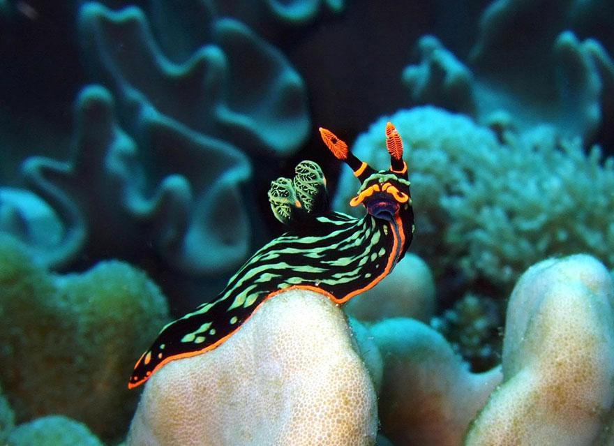 beautiful-unusual-sea-slugs-12__880