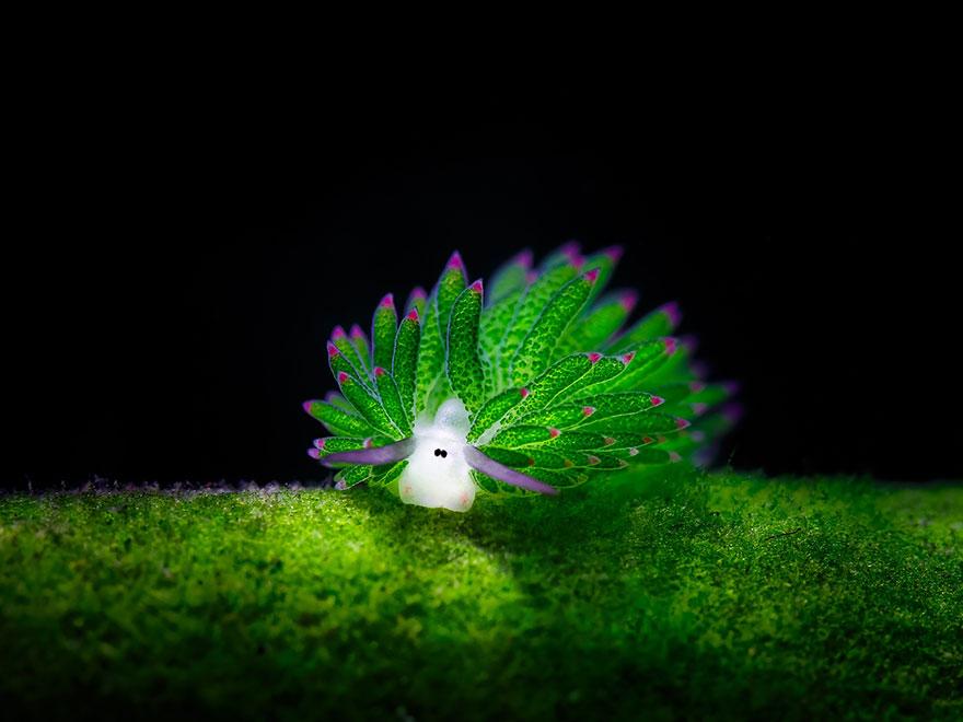 beautiful-unusual-sea-slugs-1__880