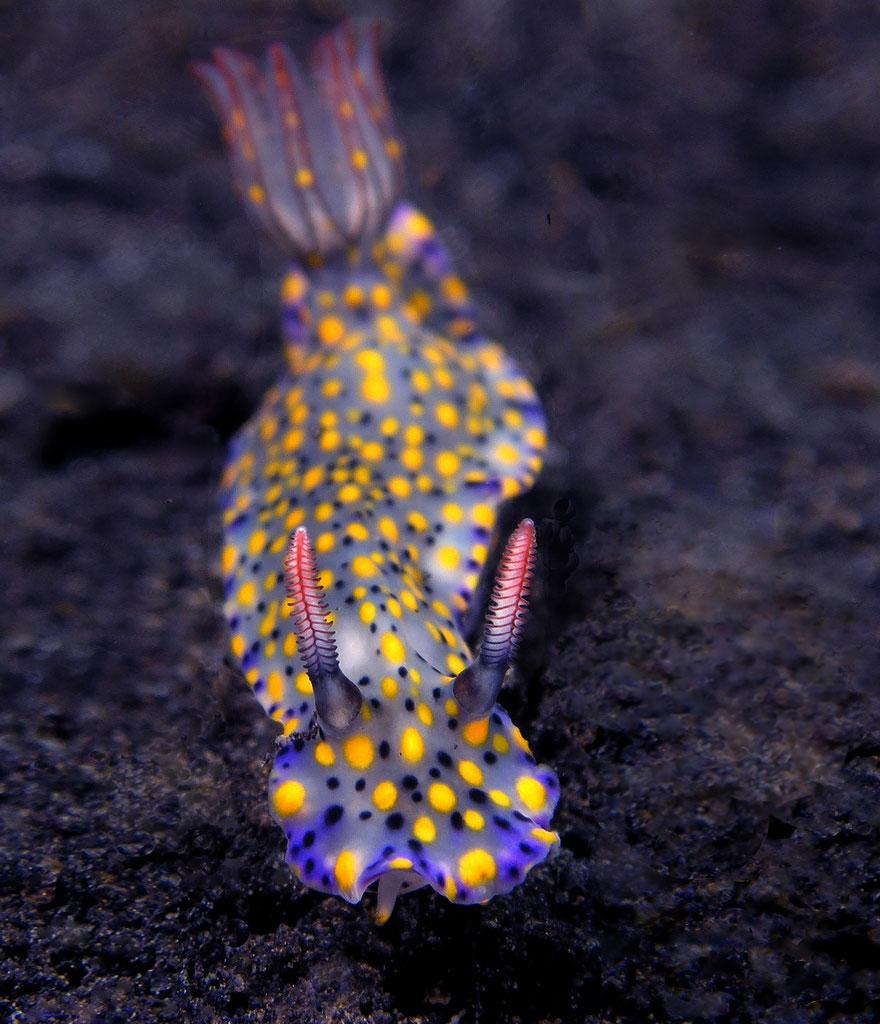 beautiful-unusual-sea-slugs-30__880