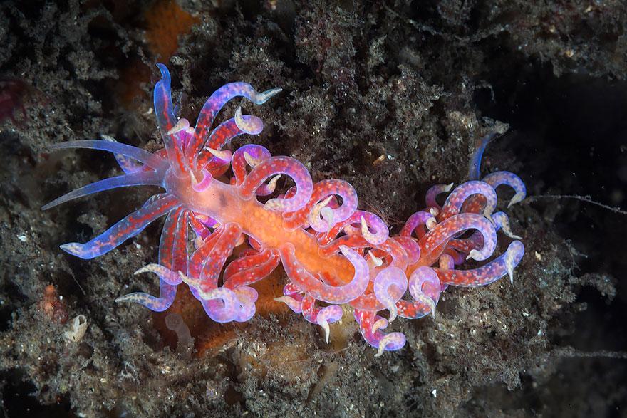 beautiful-unusual-sea-slugs-36__880