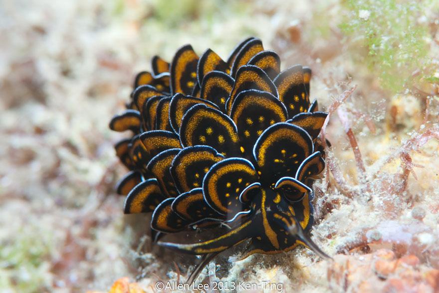 beautiful-unusual-sea-slugs-5__880