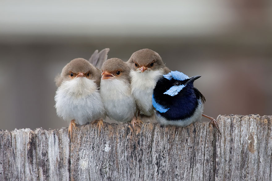 birds-keep-warm-bird-huddles-13__880