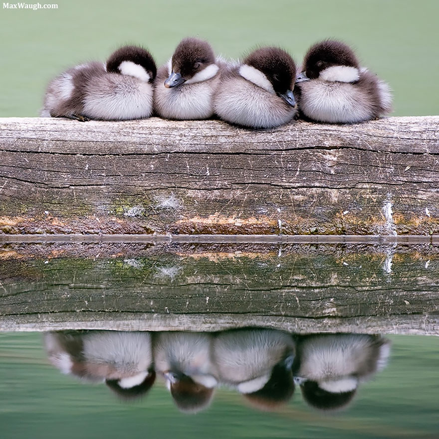 birds-keep-warm-bird-huddles-22__880