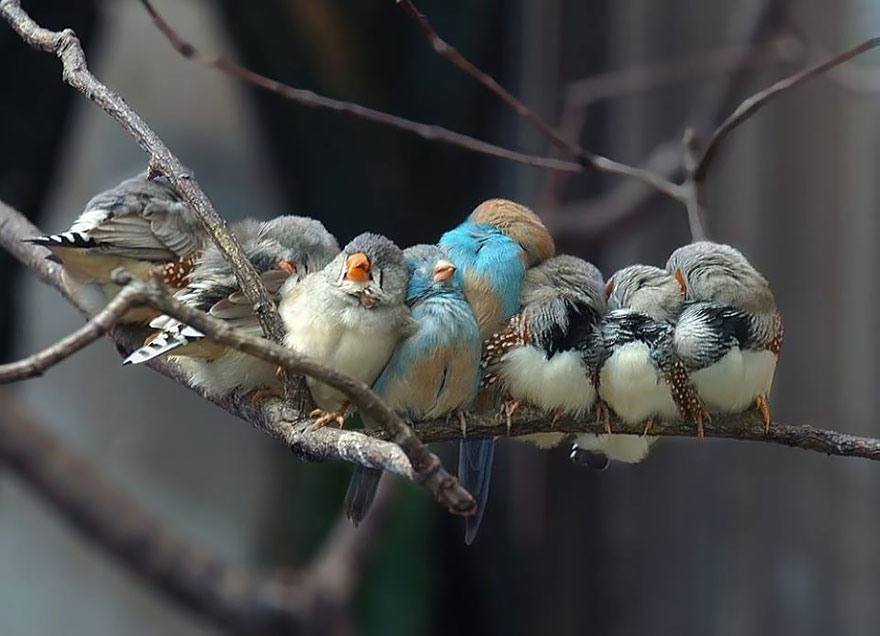 birds-keep-warm-bird-huddles-2__880