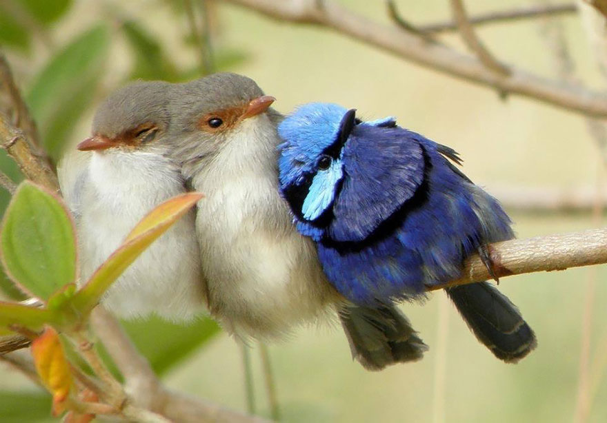 birds-keep-warm-bird-huddles-8__880