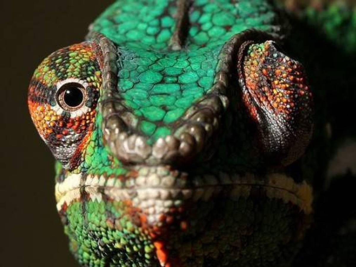 Каким видят мир собаки, кошки, жирафы, змеи и другие животные