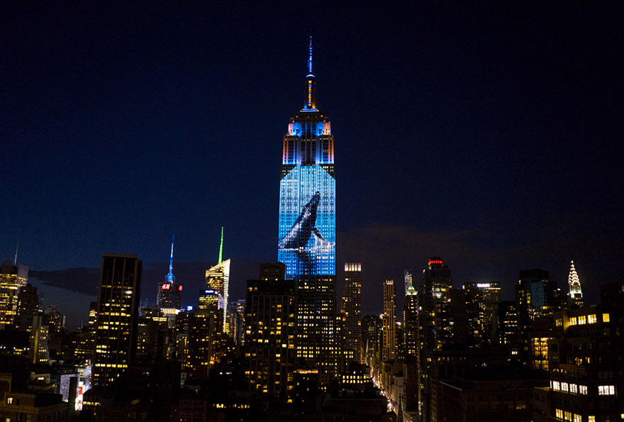 empire-state-projection-endangered-animals-nyc-10