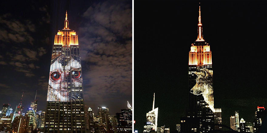 empire-state-projection-endangered-animals-nyc-21