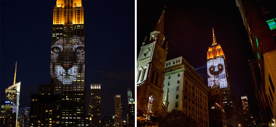 empire-state-projection-endangered-animals-nyc-29