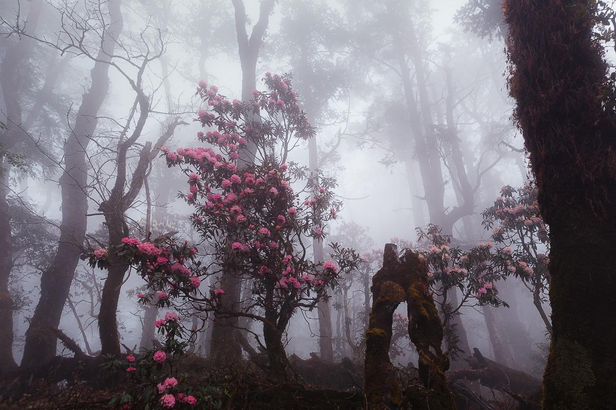 mystical landscapes_01