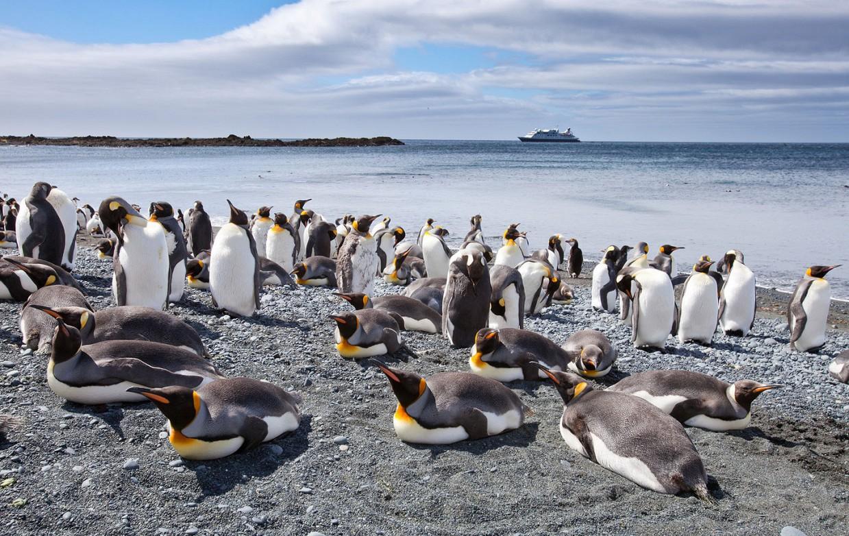 ostrov-Makkuori-pingviny-foto_2