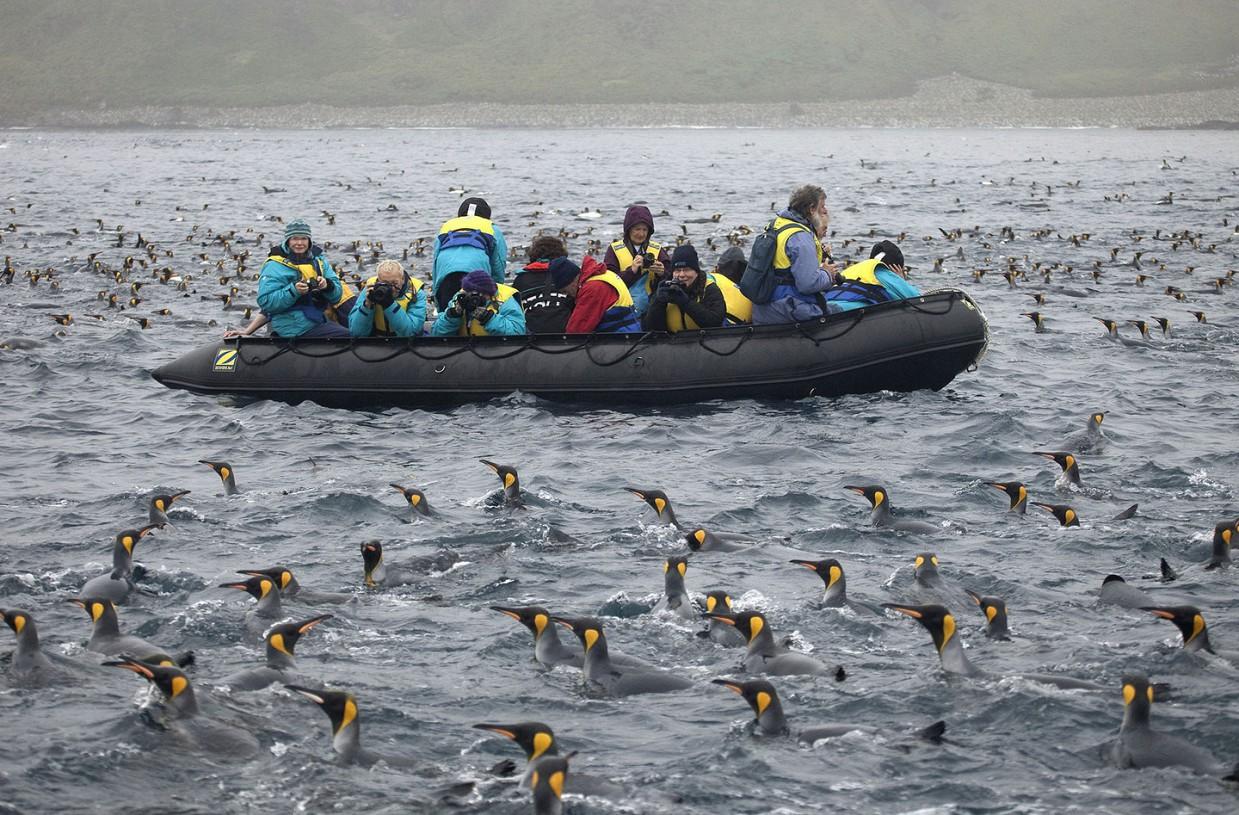 ostrov-Makkuori-pingviny-foto_4