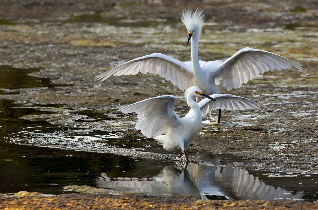 Птицы в живописном беспорядке