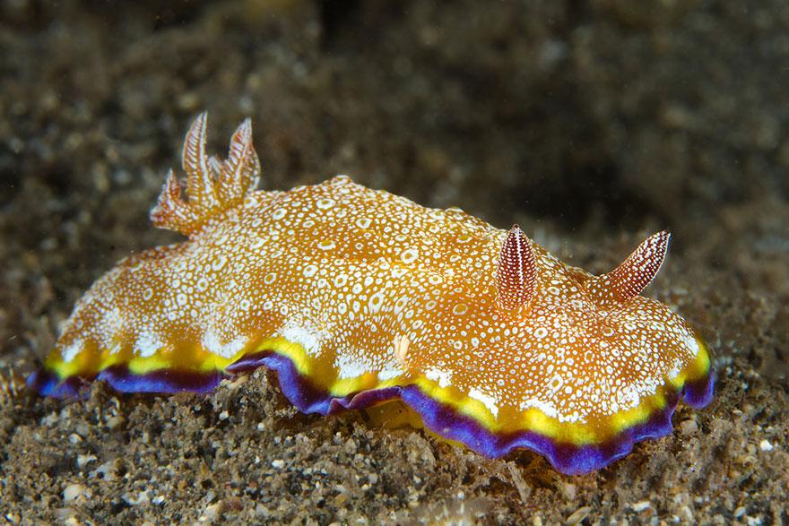 sea-slugs-103__880