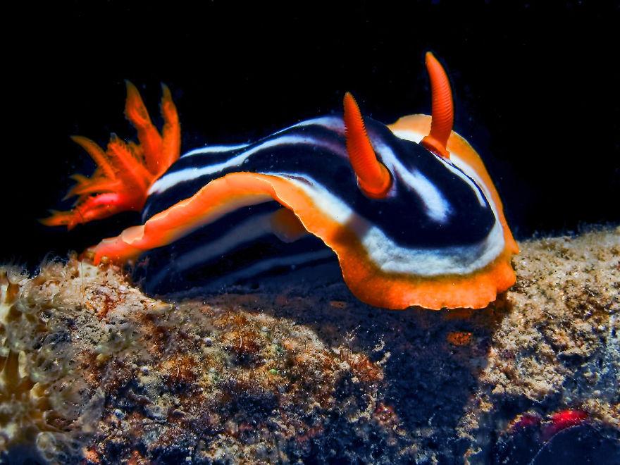 weird-sea-slug-photography-1__880