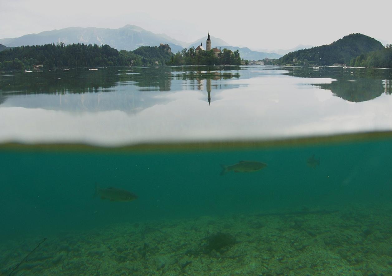Lake Bled 13